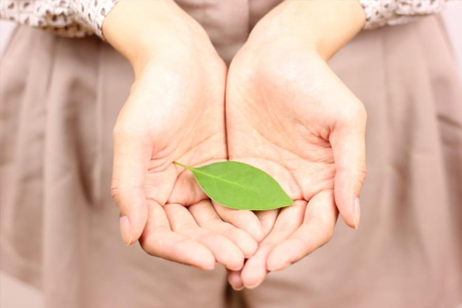 両手で包んだ葉